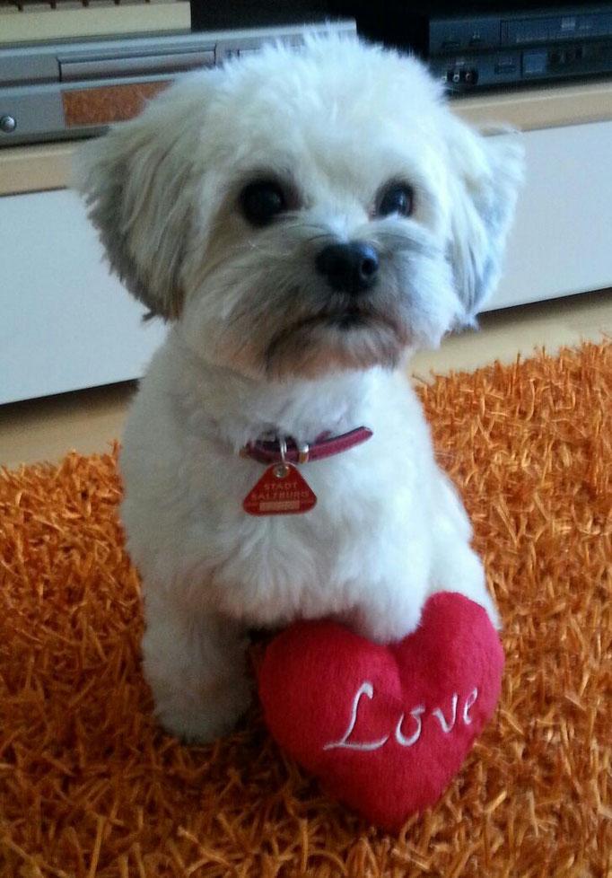 ... schöne Valentins-Grüße von Dalyza 1,1J