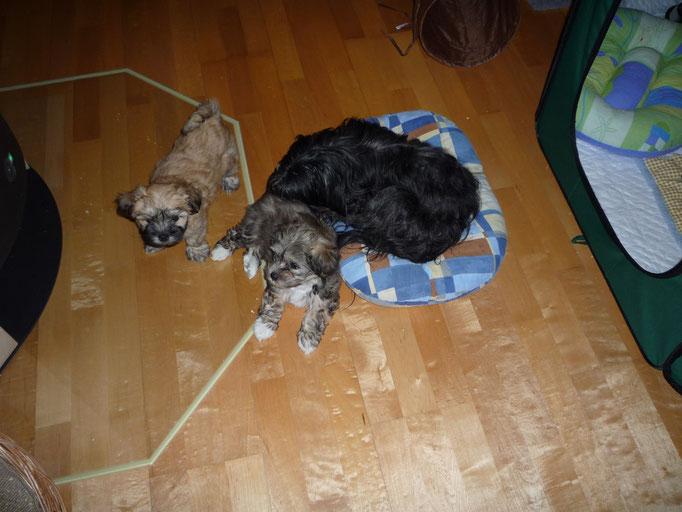 ... Hannah und ihre zwei Mäuschen Akim und Alisha ... 9 Wo
