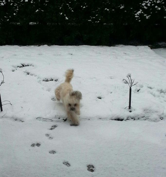 ... mein erster Schnee 2014 ... 11Mo