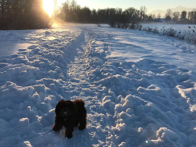 ... juhuuuu ..... soviel Schnee ... 1J