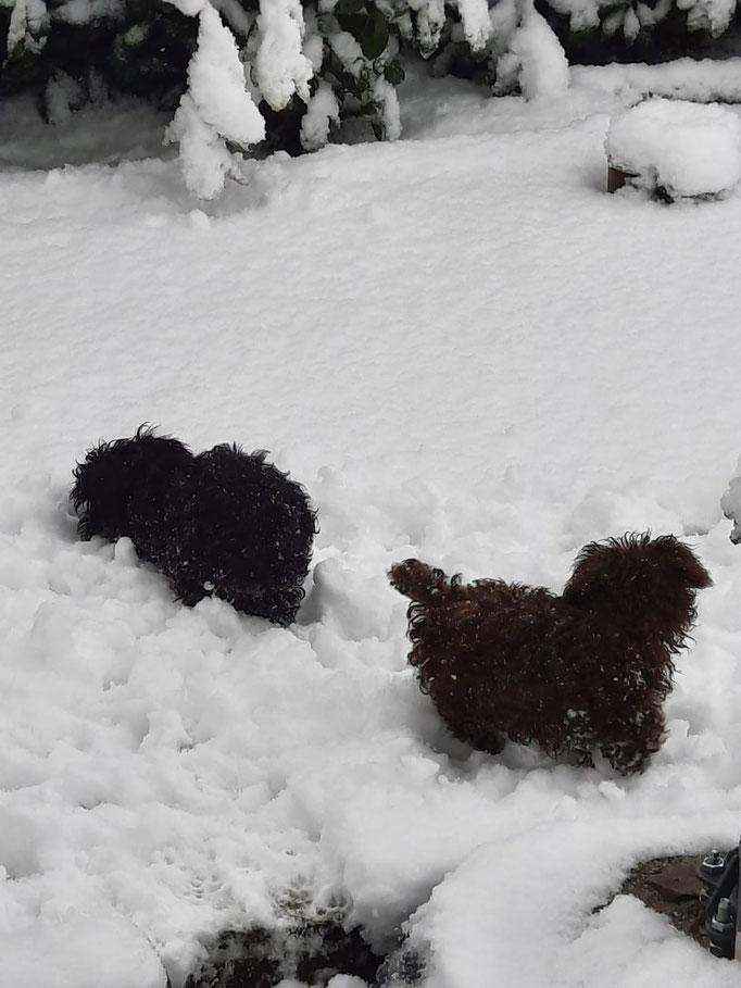 ... unser erster Schnee ... 3,5M