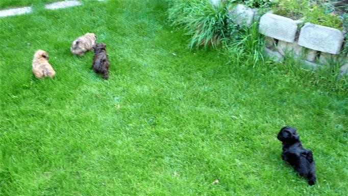 ... der Garten ist ur spannend ... 7W