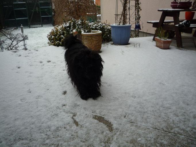 ... mein erster Schnee ... 11M