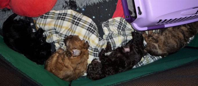 ... die Rasselbande schläft ... 6W