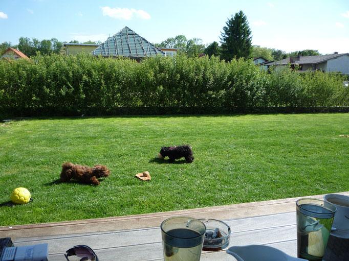 ... fetzten durch den Garten ... 4 Mo