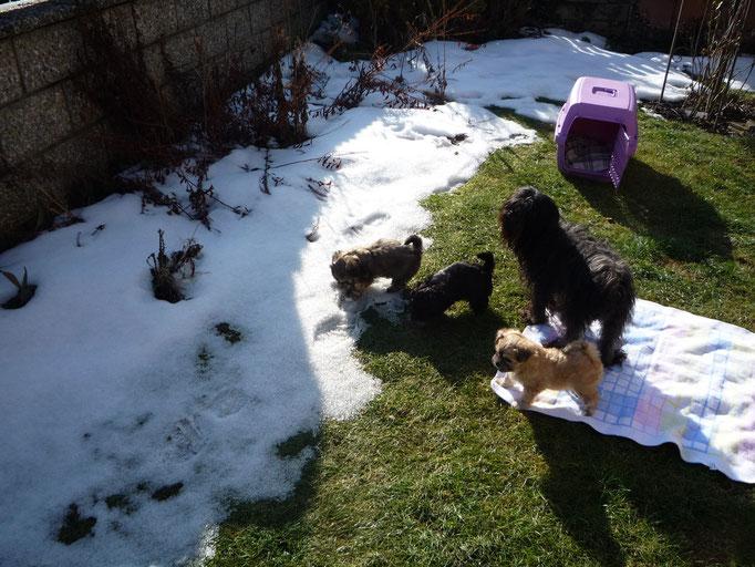 ... erste Ausflug in den Garten ... Schnee ... Gras ... 6,5 Wo