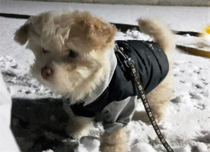 ... mein erster Schnee ... 3M