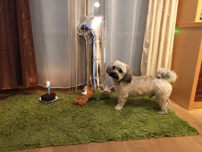 ... feier heute meinen 1. Geburtstag ... 1J