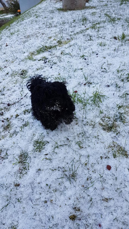 ... mei erster Schnee ... 4M