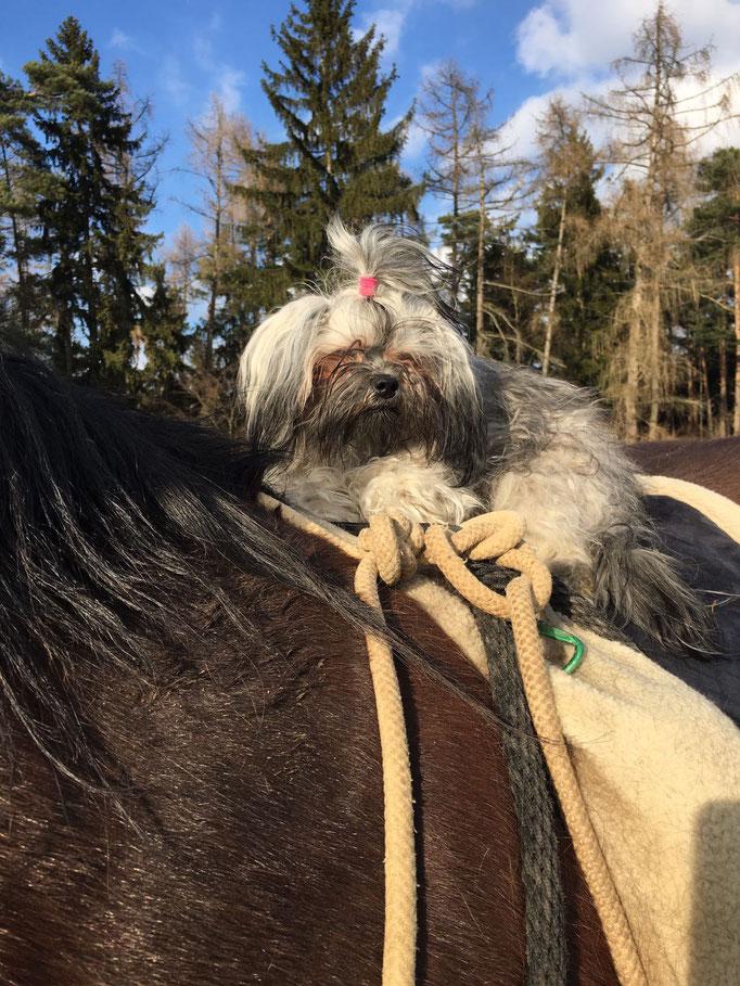 ... PrinzessinGruschenka hoch zu Roß ... 1,3J