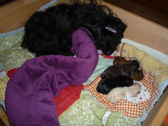 ... Mama Darya und ihre Vierlinge ...