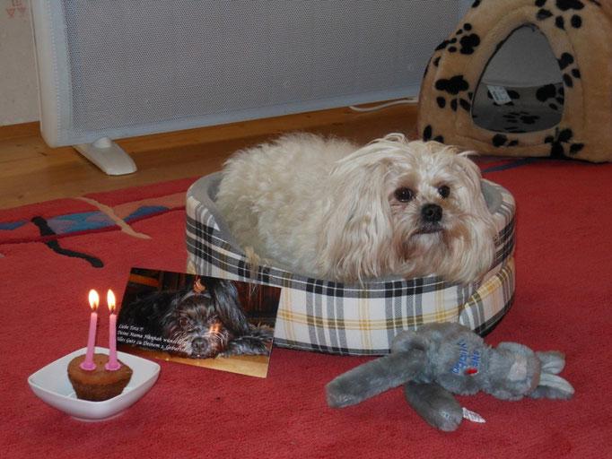 ... Hundegeil ... mein 2. Geburtstag ... 2J