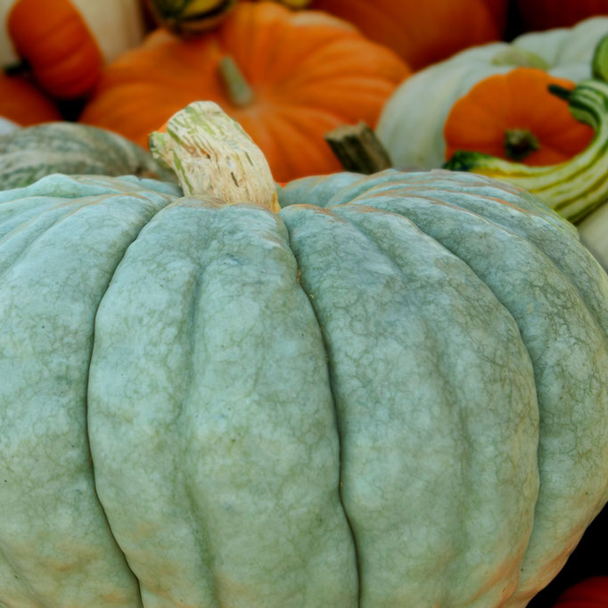 A perfect pumpkin from Frey Farms