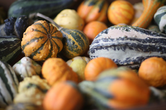 Colorful gourds, Frey Farms