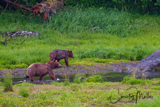 """An excellent viewing site for Grizzly Bears is Pack Creek on Admiralty Island. The native Tlingít indians call the place  """"Kootznoowoo,"""" or """"Fortress of the Bears."""""""