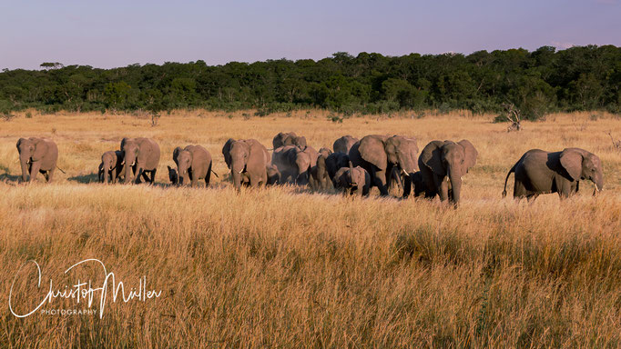 Hwange National Park has large groups of Elephants, which were all the decades under special protection.