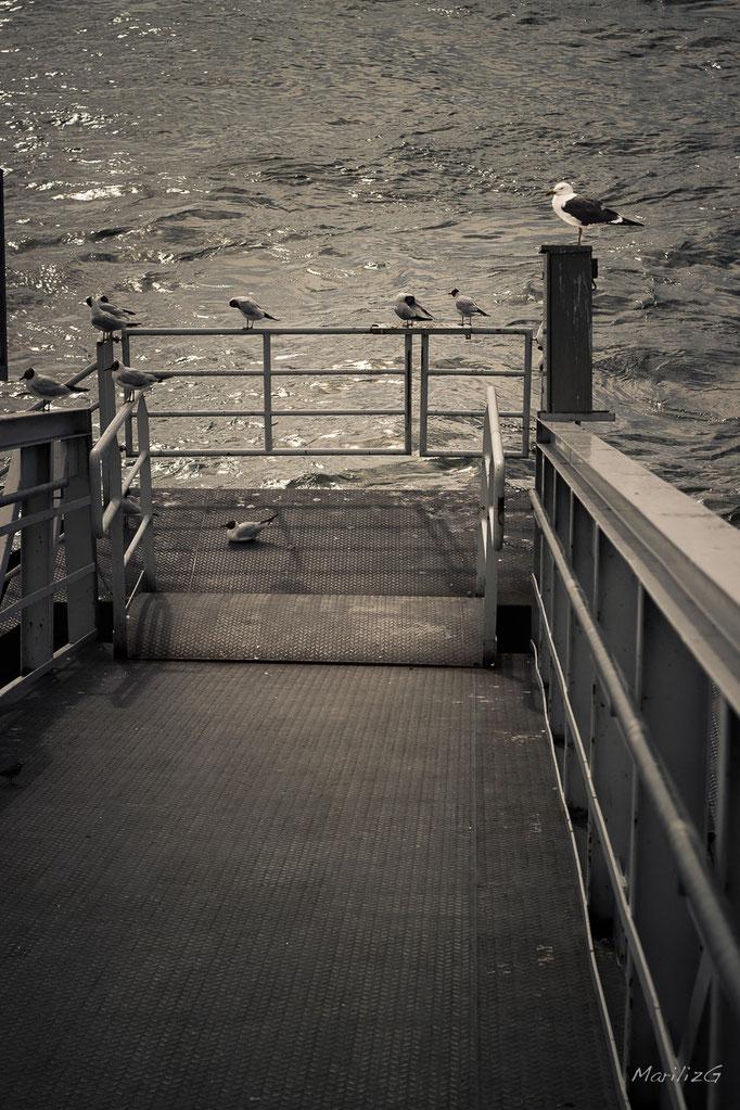 Embarcadère... le Rhin