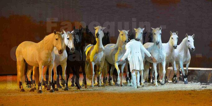 """Cheval Passion 2016 - Spectacle les Crinières d'OR - LORENZO """"Blanc"""" - représentation du 23 janvier 2016 - 094"""