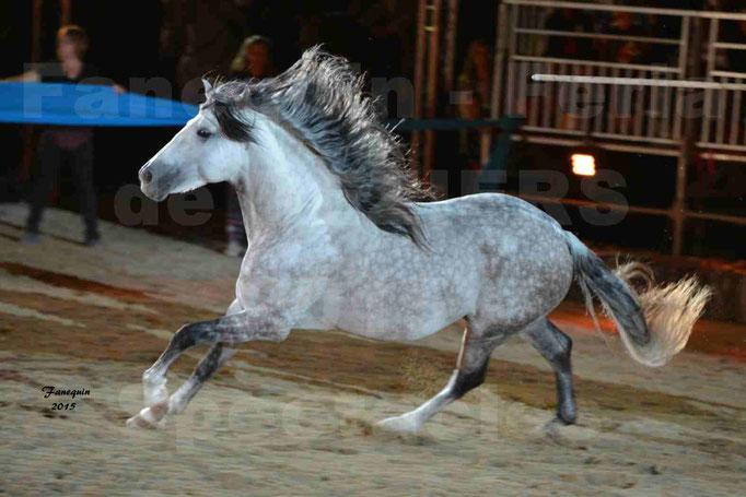 Nuits Équestres de la Féria de Béziers 2015 - troupe portugaise & cheval en liberté
