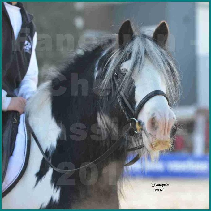 Cheval Passion 2016 - IRISH COB