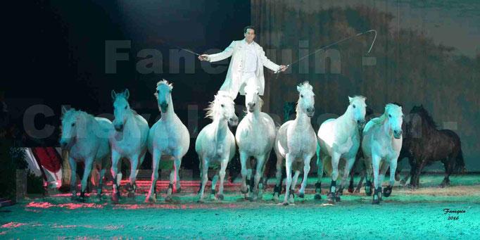 """Cheval Passion 2016 - Spectacle les Crinières d'OR - LORENZO """"Blanc"""" - représentation du 23 janvier 2016 - 048"""
