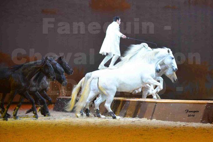 """Cheval Passion 2016 - Spectacle les Crinières d'OR - LORENZO """"Blanc"""" - représentation du 23 janvier 2016 - 069"""
