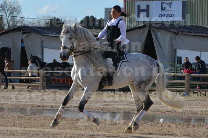 Cheval Passion 2014 - Frédérique VIGNIER & son cheval Gris PRE