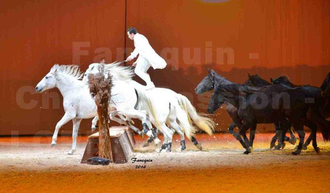 """Cheval Passion 2016 - Spectacle les Crinières d'OR - LORENZO """"Blanc"""" - représentation du 20 janvier 2016 - 54"""