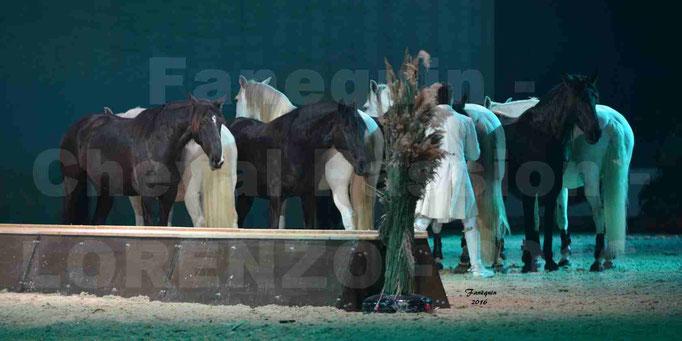 """Cheval Passion 2016 - Spectacle les Crinières d'OR - LORENZO """"Blanc"""" - représentation du 23 janvier 2016 - 041"""