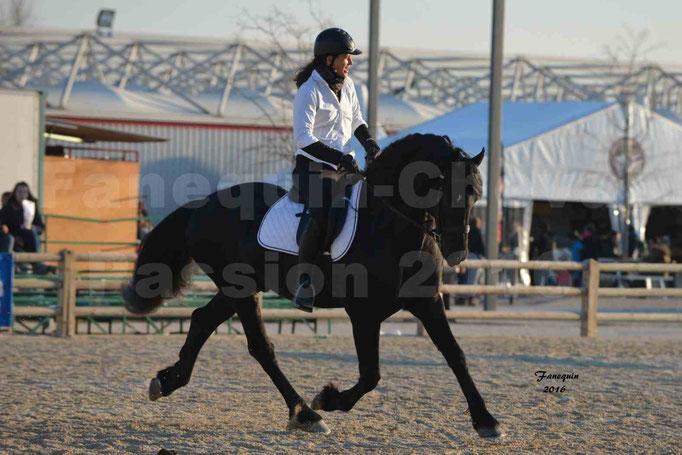 Cheval Passion 2016 - Étalon Arabo Frison