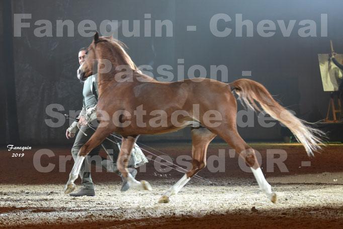 Cheval Passion 2019 - Spectacle des CRINIÈRES d'OR - Frédéric PIGNON & Cheval Alezan en liberté - 06