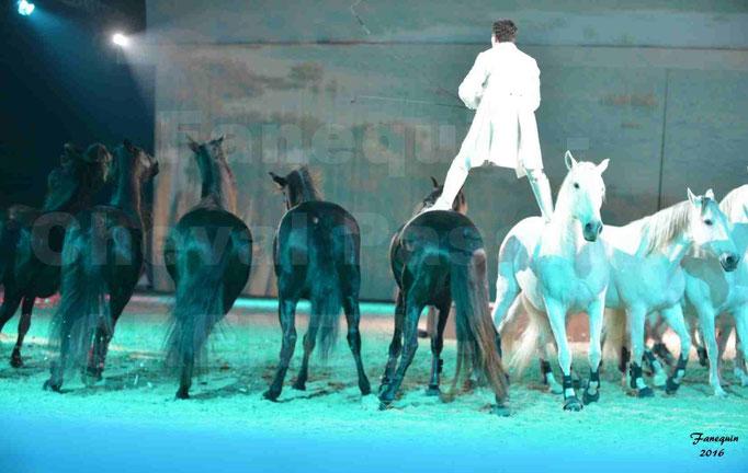 """Cheval Passion 2016 - Spectacle les Crinières d'OR - LORENZO """"Blanc"""" - représentation du 20 janvier 2016 - 42"""