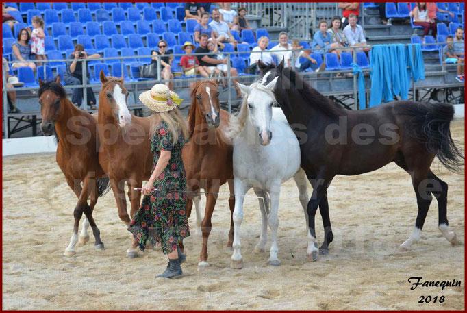 """""""Nuits Équestres""""  de la Féria de BÉZIERS 2018 - Spectacle en journée - Sylvie WILLMS & ses chevaux en liberté - 03"""