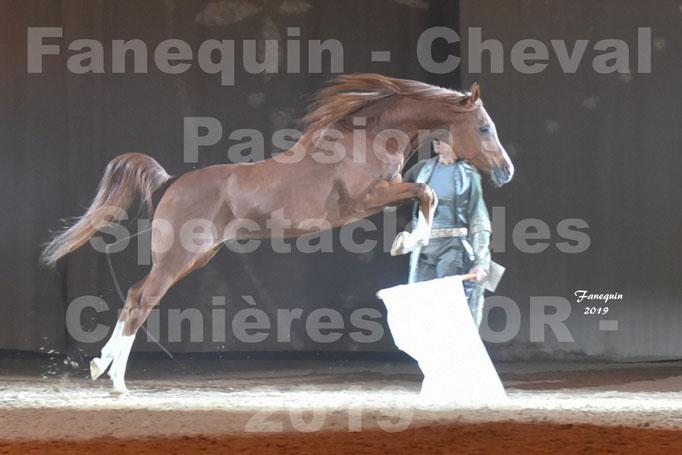 Cheval Passion 2019 - Spectacle des CRINIÈRES d'OR - Frédéric PIGNON & Cheval Alezan en liberté - 11