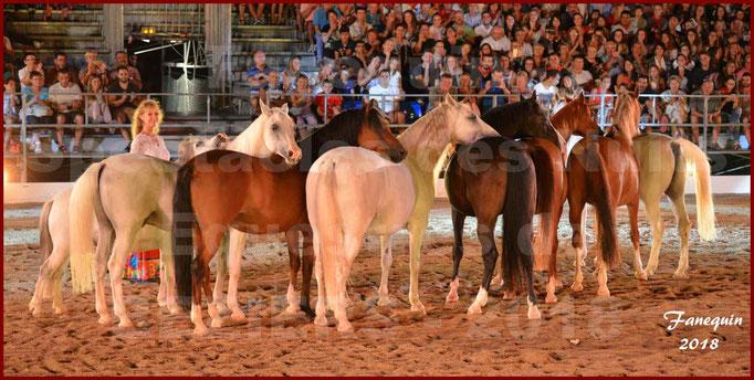 """Spectacles Équestres des """"Nuits Équestres""""  de la Féria de BÉZIERS 2018 - Sylvie WILLMS & ses chevaux en liberté - 35"""
