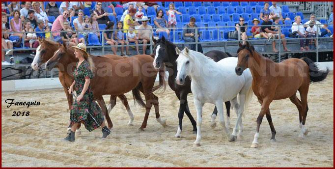 """""""Nuits Équestres""""  de la Féria de BÉZIERS 2018 - Spectacle en journée - Sylvie WILLMS & ses chevaux en liberté - 01"""