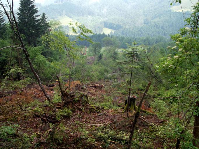 Blick vom Höhenbergweg nach unten ins Rutschgelände.