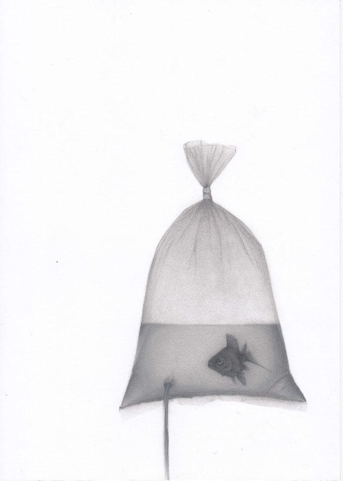FischBag_21cm x 30cm_indian ink,pencil_on paper.