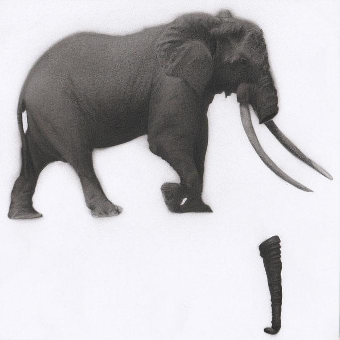 Elephant_30cm x 30cm_indian ink,pencil_on paper.