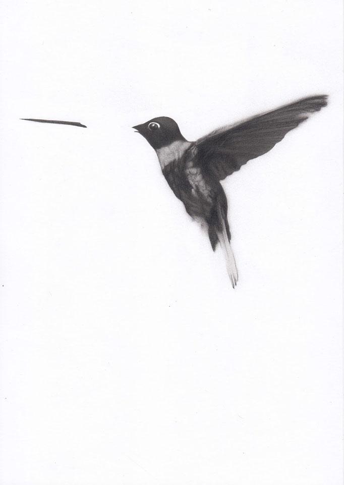 Colibrì_21cm x 30cm_indian ink,pencil_on paper.