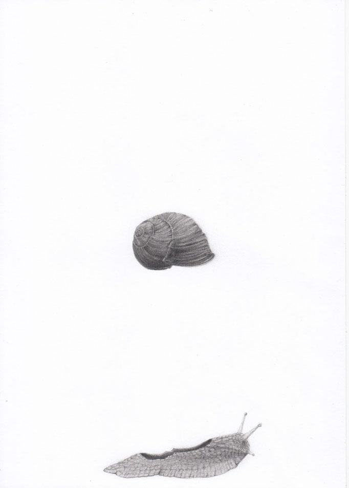 Snail_21cm x 30cm_indian ink,pencil_on paper.