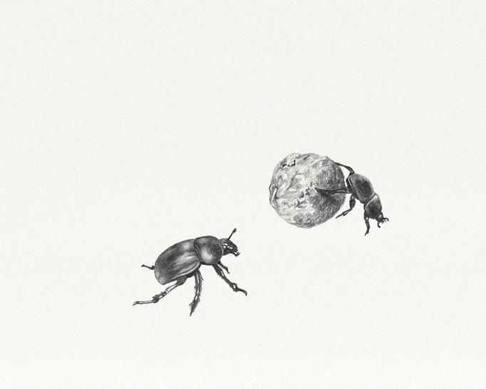 Coléoptères coprophages