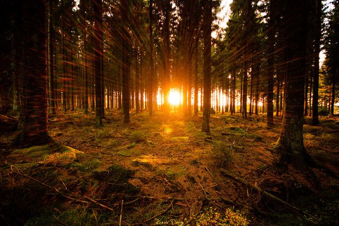 Brackvenn beim Sonnenuntergang