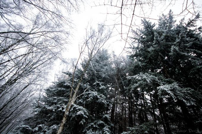 Wurmtal im Schnee 2017
