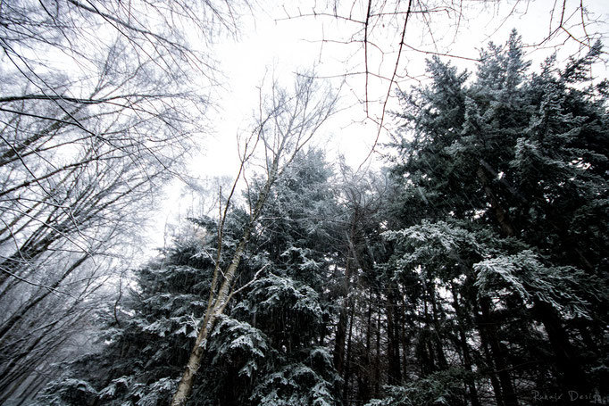 W23 - Wurmtal im Schnee 2017