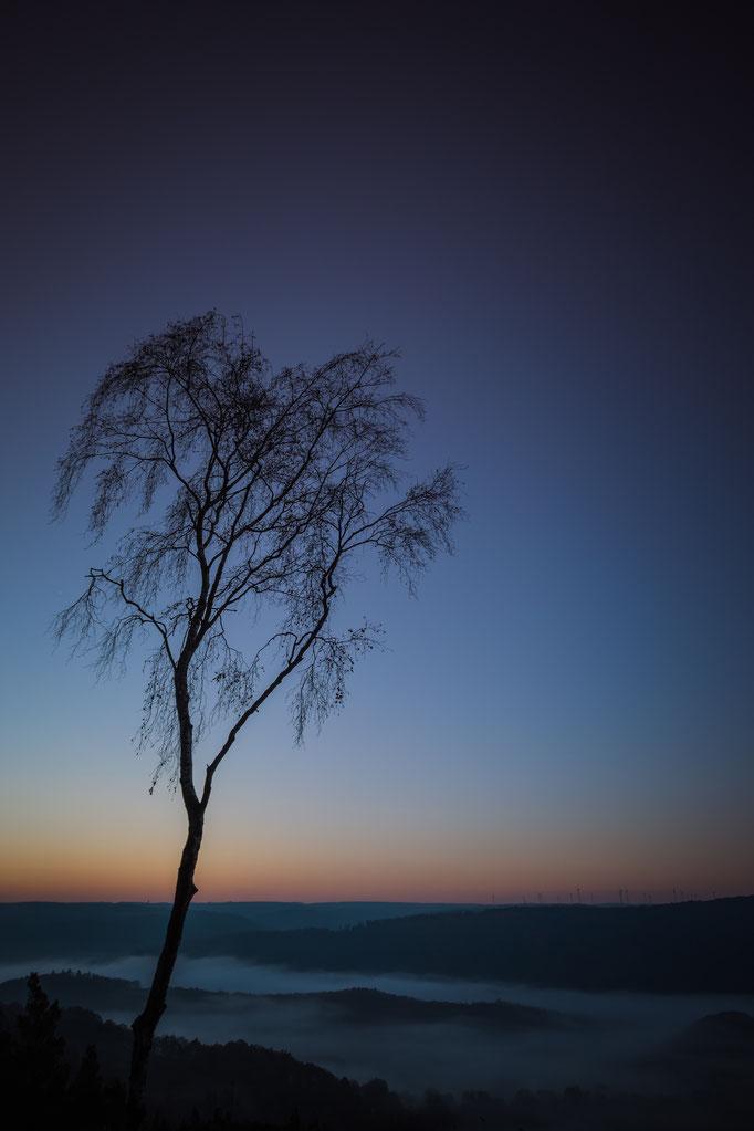 Baum Ausichtspunkt Dedenborn