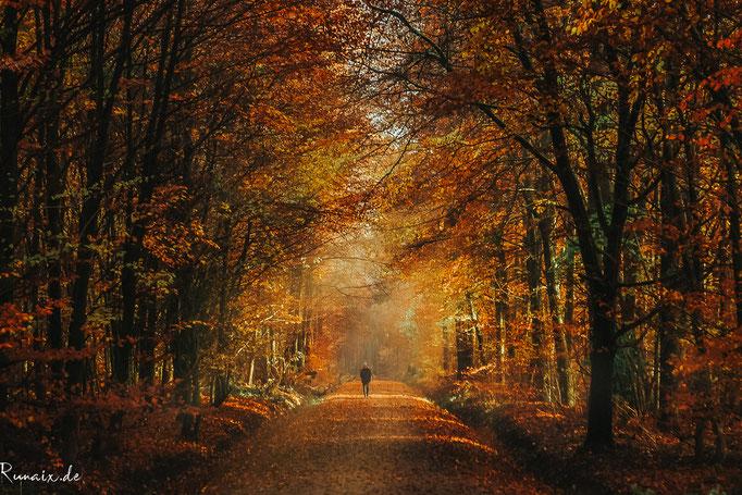 Der randiose Aachener Wald am morgen
