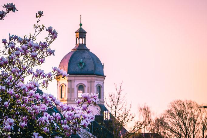 Der Würselener Dom mit Frühlingsmagnolie