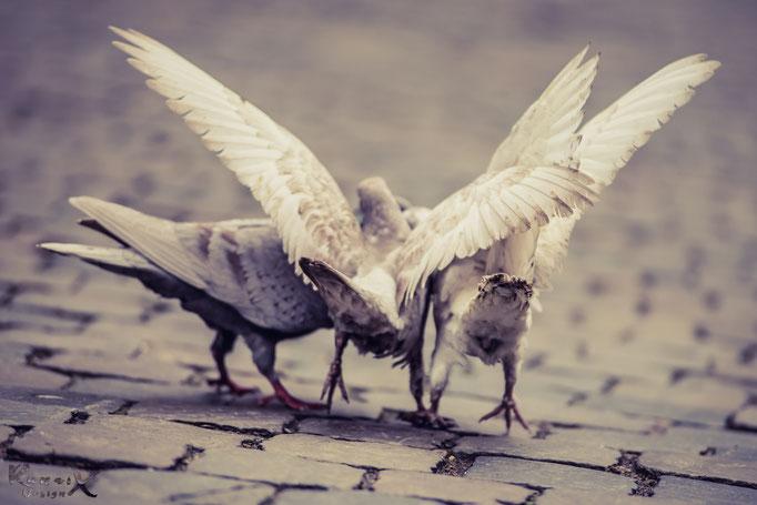 Tauben vor dem Dom