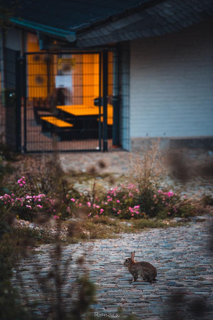 W111 -Hase vor der Stadtgartenkita